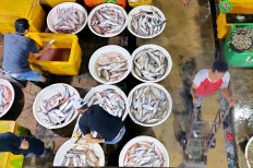 Ebb and flow: Traders sort their catches at the Muara Angke Wholesale Fish Market in North Jakarta on Jan. 23, 2021. The period between December and January is a low fishing season, but fishermen and traders know that these difficult times will not last. (JP/Ricky Yudhistira)
