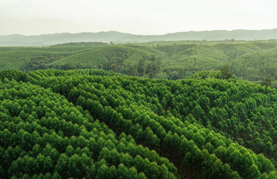 Balancing sustainable development and conservation in the forestry sector in Indonesia
