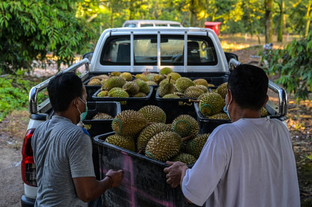 Malaysian durian trade battered as lockdown bites