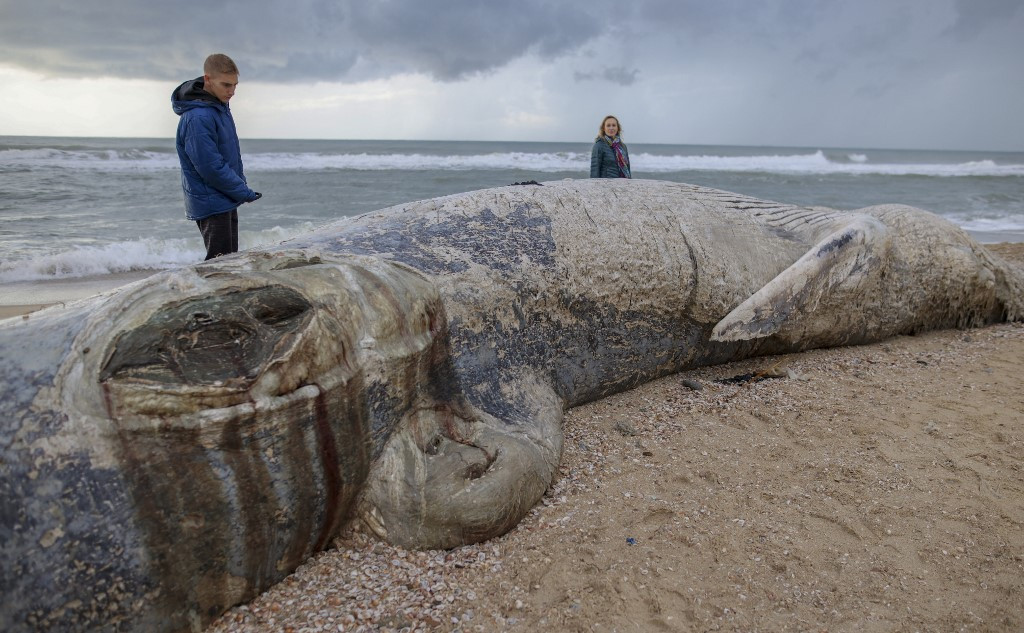 Dead whale washes up on Israeli shore after storm