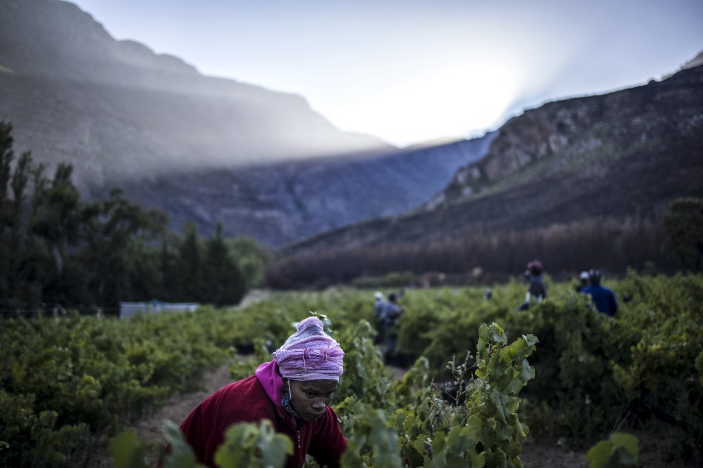 South African wine 'paradise' finds success by going its own way