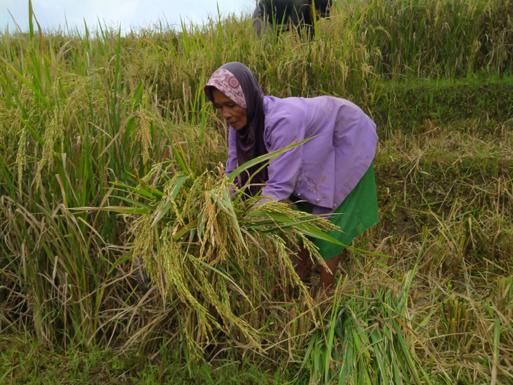 As the COVID-19 pandemic exacerbates existing economic and gender inequalities, female farmers in Kulon Progo, Yogyakarta have been struggling to find alternative sources of income while they juggle work, child rearing and other household responsibilities.