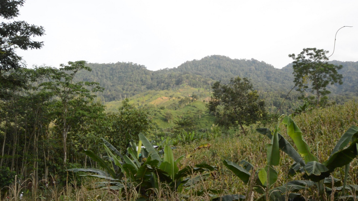 Indonesia: A forest first nation