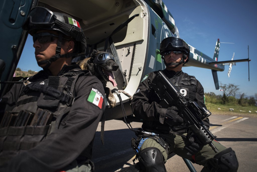 Latin America's police dogs turn noses to Covid