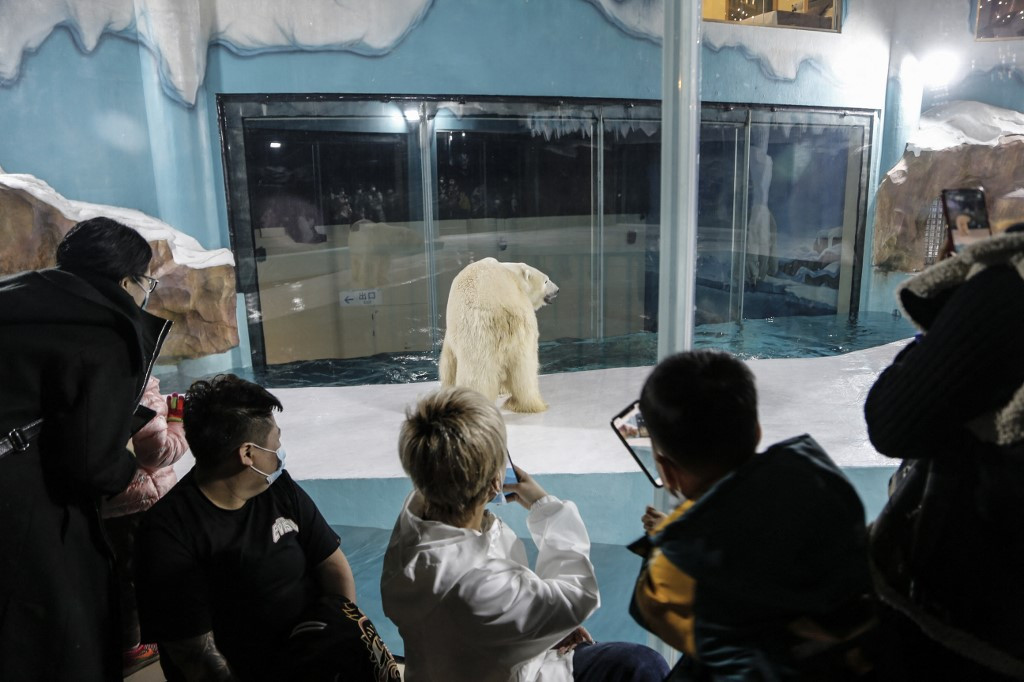 Frosty reception for China hotel with polar bears on show