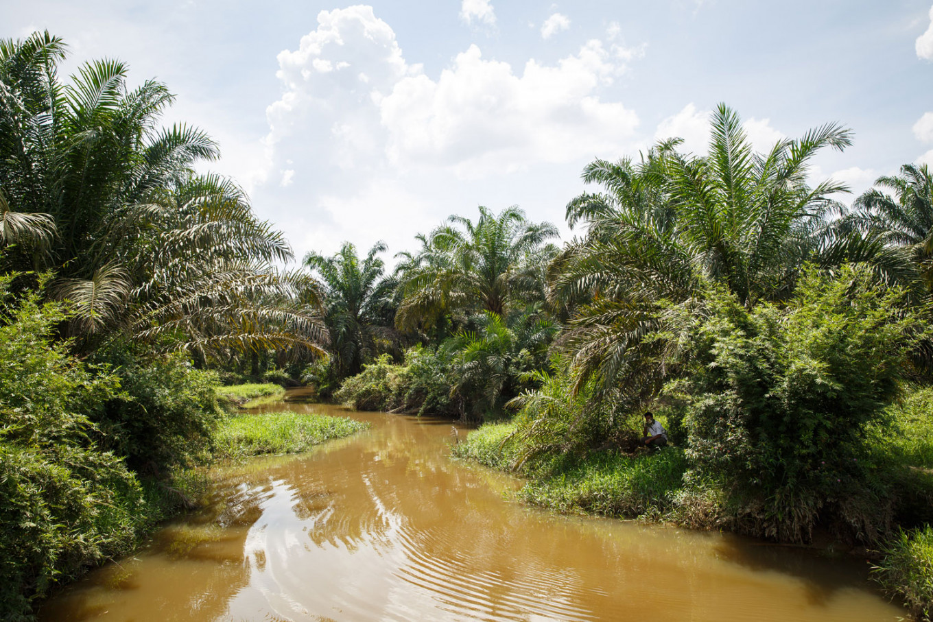 RSPO: How oil palm plantations can reduce flood risk