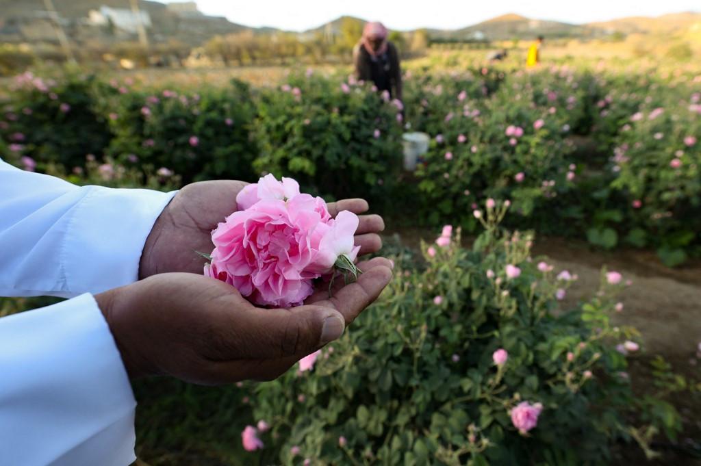 Saudi Arabia's city of roses blooms in Ramadan