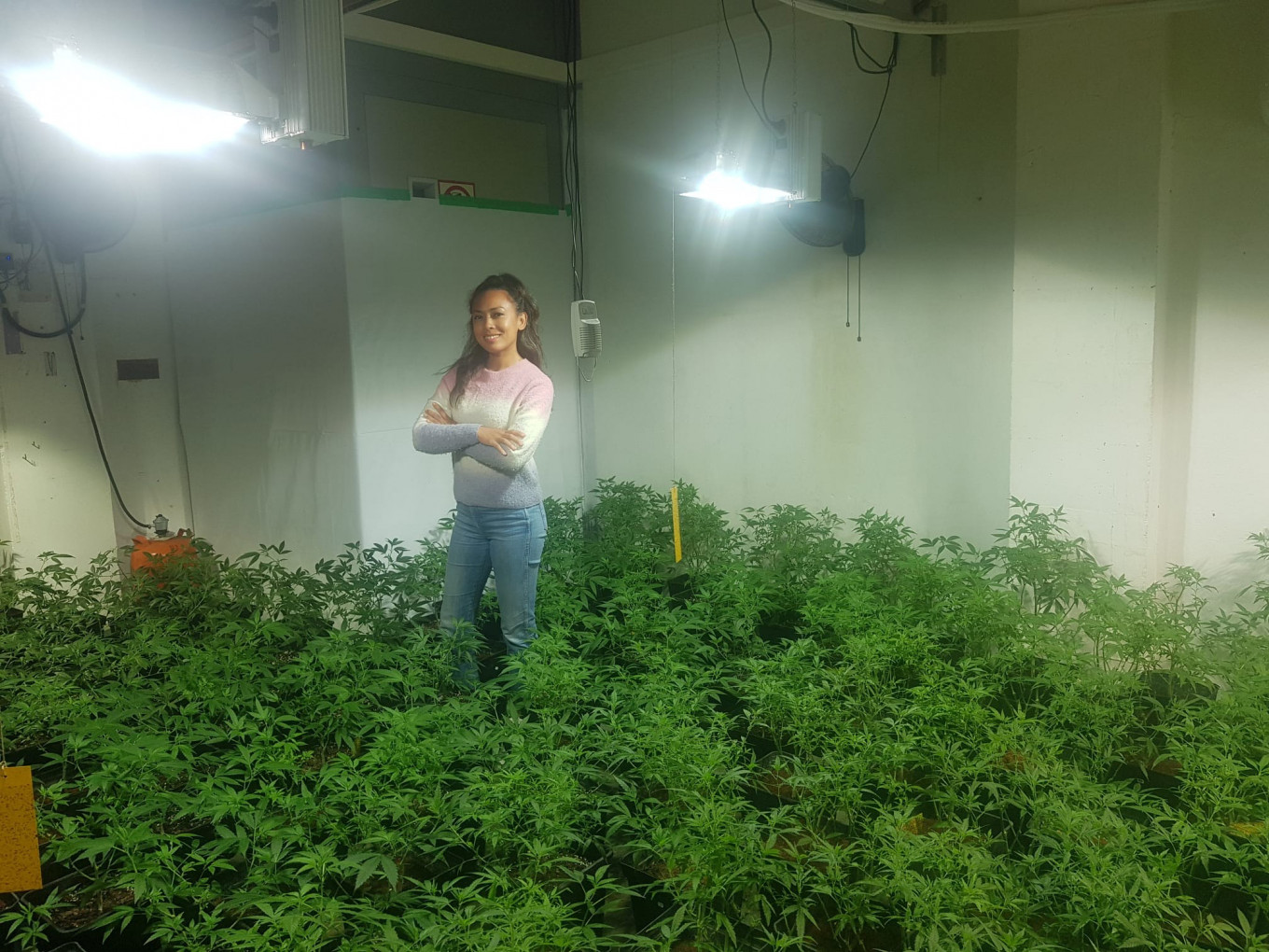 Farming pot abroad: The Indonesians living overseas as marijuana farmers