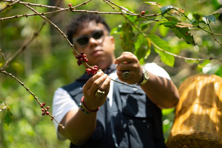 Cherry-picking: Hedi picks coffee cherries at Saux Farm.