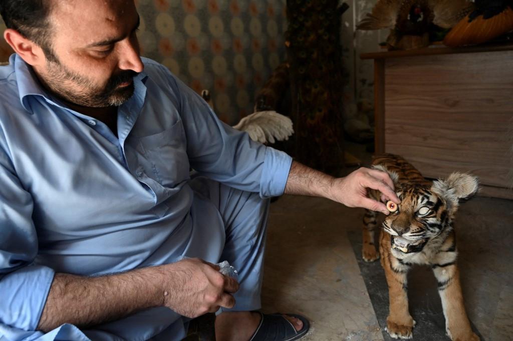 Full of love: bereaved pet homeowners flip to taxidermy in Pakistan